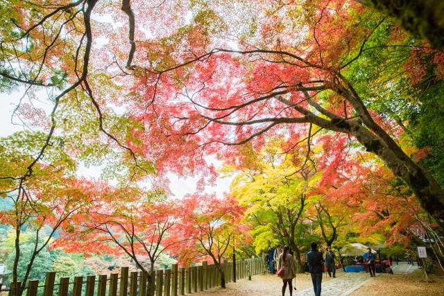 f:id:gaoyang:20141112133626j:image