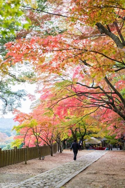f:id:gaoyang:20141112155240j:image