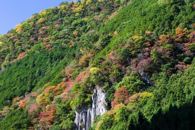 f:id:gaoyang:20141113124742j:image