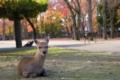 2014年11月14日 奈良公園