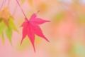 2014年11月14日 東福寺