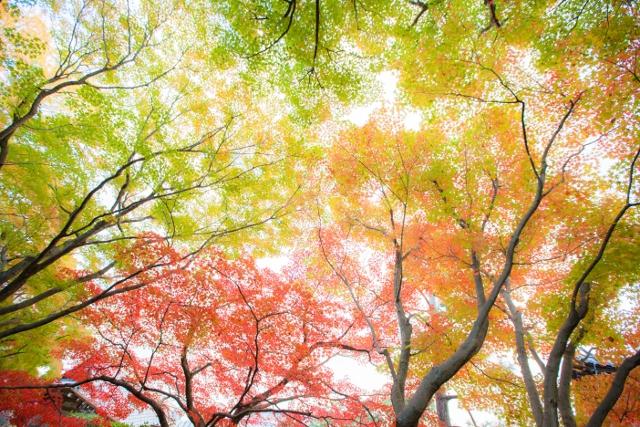 f:id:gaoyang:20141114152633j:image