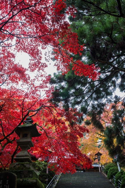 f:id:gaoyang:20141127093420j:image