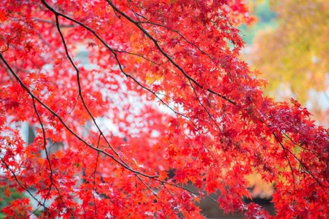 f:id:gaoyang:20141127094317j:image