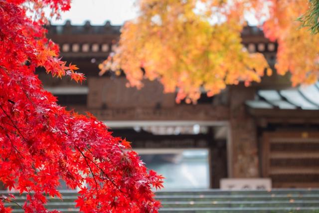 f:id:gaoyang:20141127095216j:image