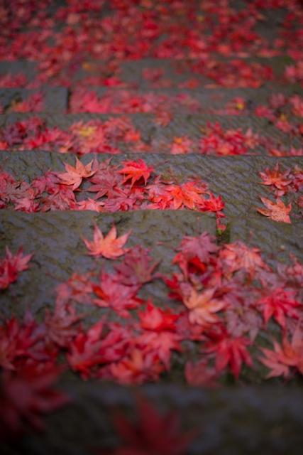 f:id:gaoyang:20141127115313j:image