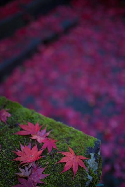 f:id:gaoyang:20141127125515j:image