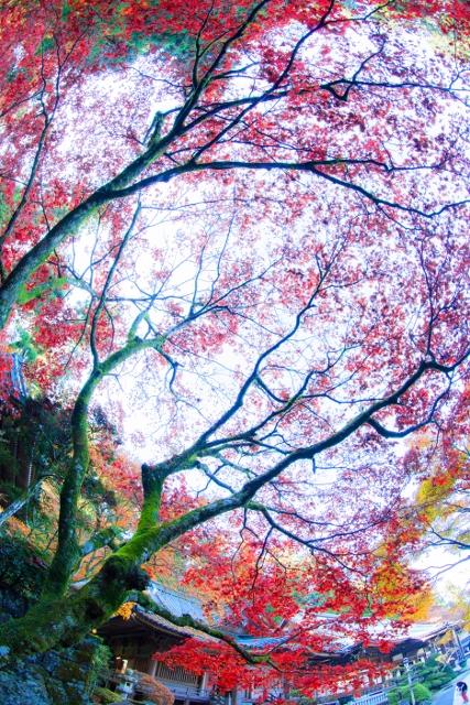 f:id:gaoyang:20141127133134j:image