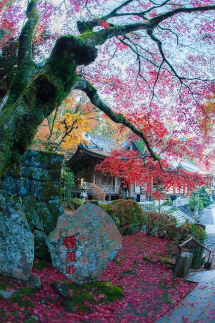 f:id:gaoyang:20141127133230j:image