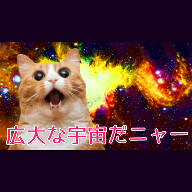 ネコ氏、宇宙へ帰る