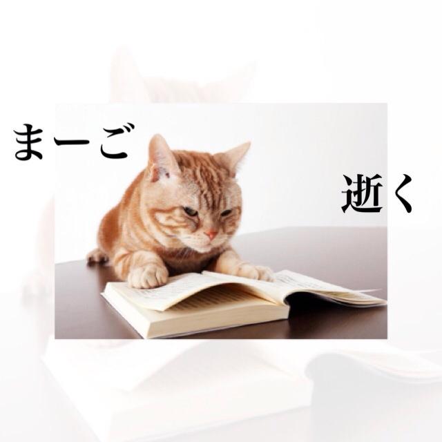 テレ東『週刊ニュース新書』マスコット猫の「まーご」さん亡くなる