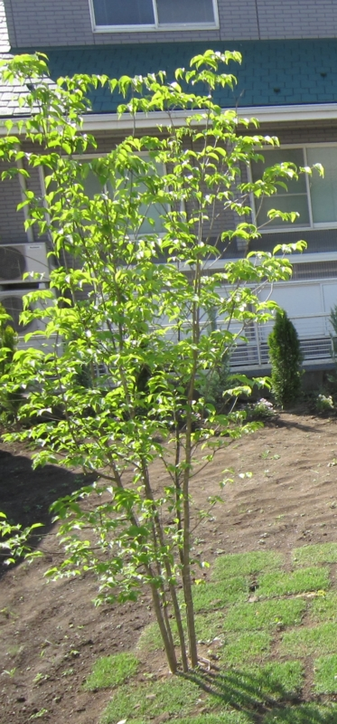 f:id:gardentime:20170511125955j:plain