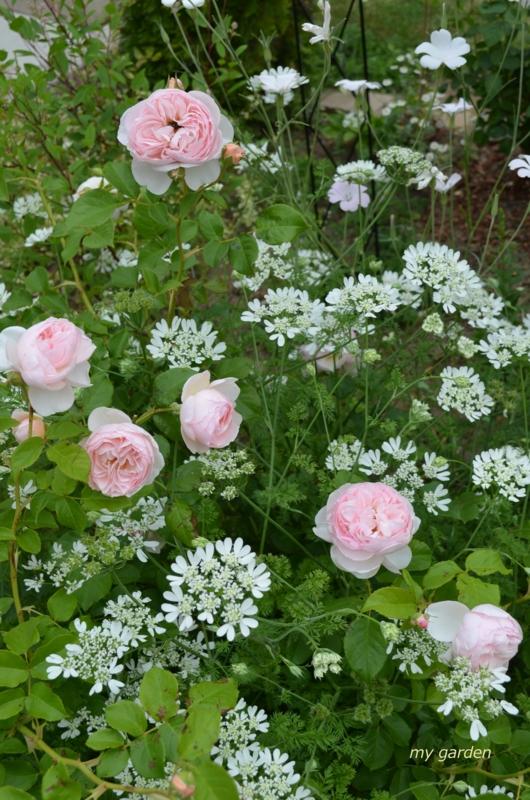 f:id:gardentime:20170515174023j:plain
