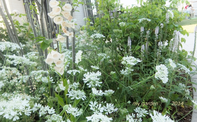 f:id:gardentime:20170515174025j:plain