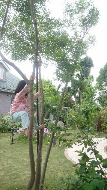 f:id:gardentime:20170516002343j:plain