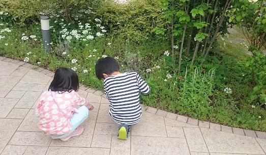 f:id:gardentime:20170516002347j:plain