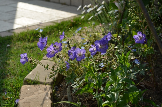 f:id:gardentime:20170519143748j:plain