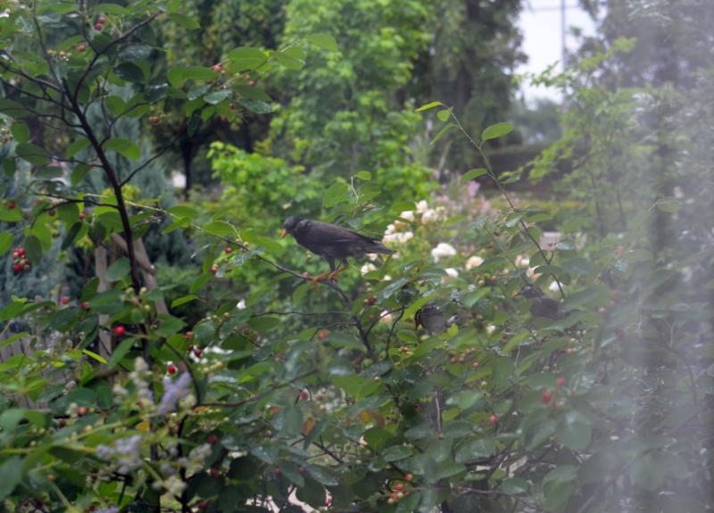 f:id:gardentime:20170525130913j:plain