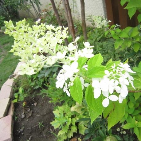 f:id:gardentime:20170603112050j:plain