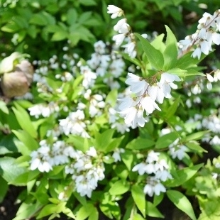 f:id:gardentime:20170603112051j:plain