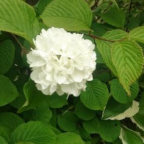 f:id:gardentime:20170603112052j:plain