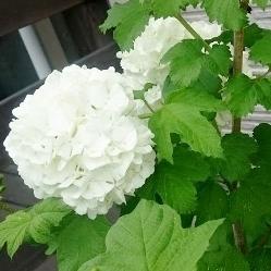 f:id:gardentime:20170603112053j:plain