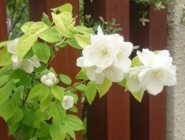 f:id:gardentime:20170603112055j:plain