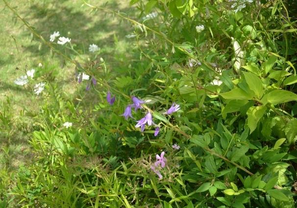 f:id:gardentime:20170603190017j:plain