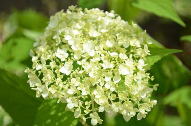 f:id:gardentime:20170608111539j:plain