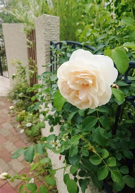 f:id:gardentime:20170608130421j:plain