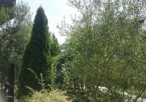 f:id:gardentime:20170614115808j:plain