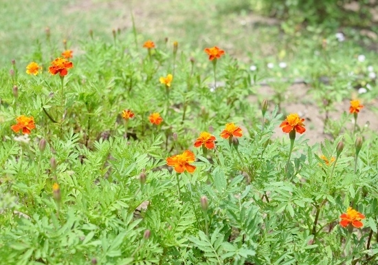 f:id:gardentime:20170623225115j:plain