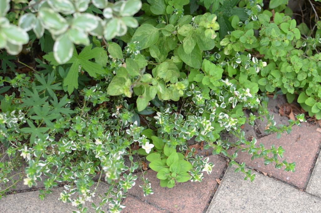 f:id:gardentime:20170703130620j:plain