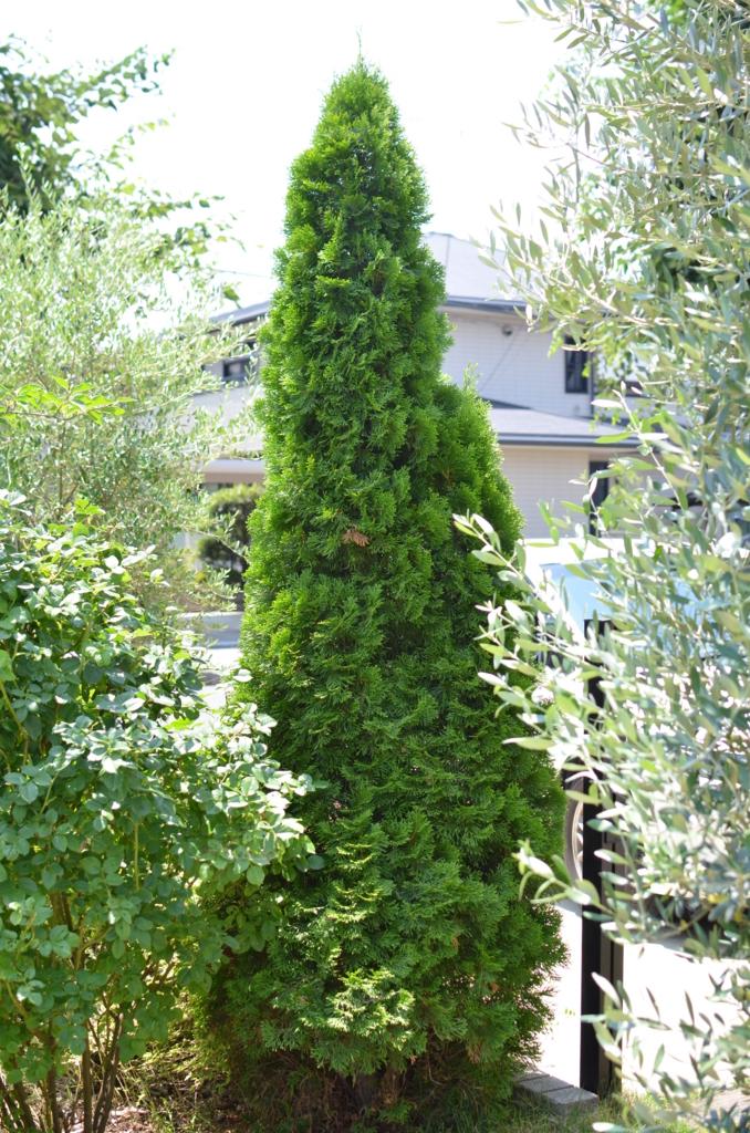f:id:gardentime:20170707140940j:plain