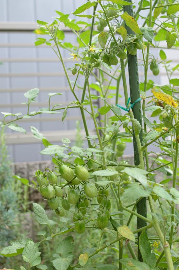 f:id:gardentime:20170709211845j:plain