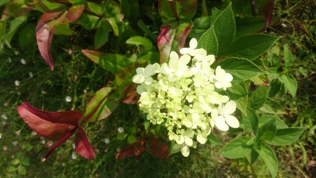 f:id:gardentime:20170720101019j:plain