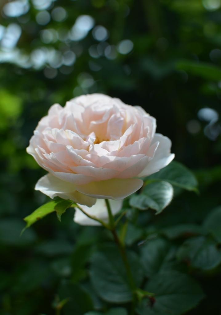 f:id:gardentime:20170804225328j:plain