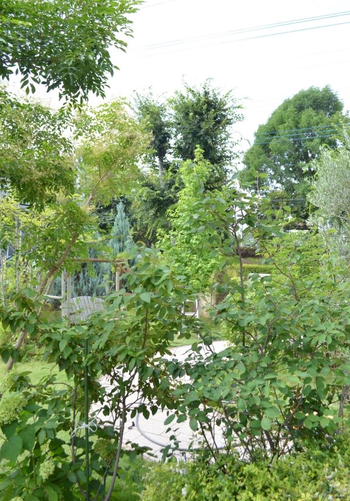 f:id:gardentime:20170805025437j:plain
