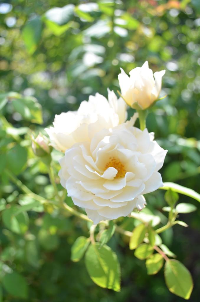 f:id:gardentime:20170814193914j:plain