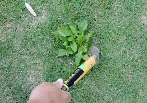 f:id:gardentime:20170814200325j:plain