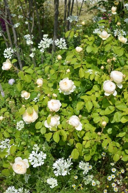 f:id:gardentime:20170815182526j:plain