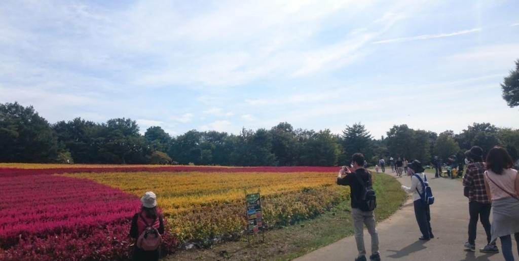 f:id:gardentime:20171004103757j:plain