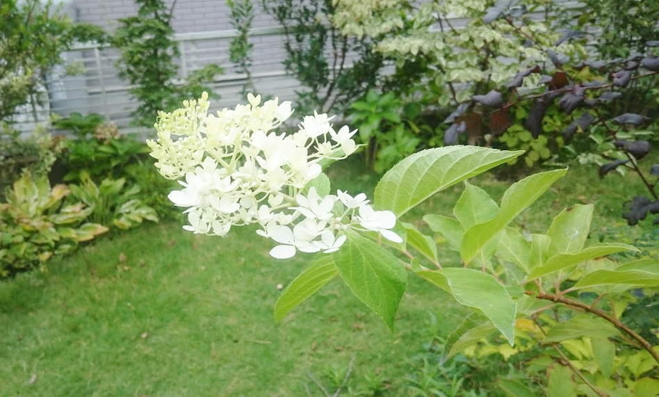 f:id:gardentime:20171006140058j:plain