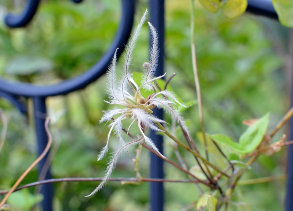 f:id:gardentime:20171006145417j:plain