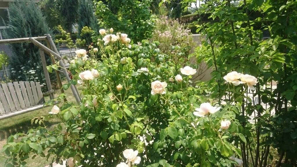 f:id:gardentime:20171205231409j:plain