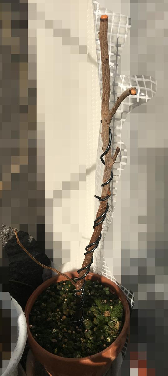 f:id:gartenzwerge:20210223192157j:plain