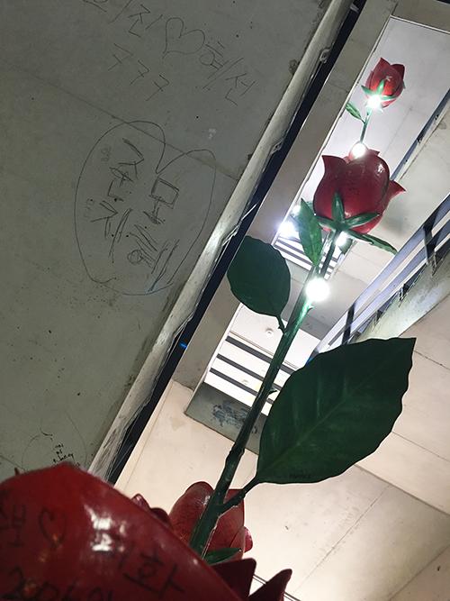 階段とバラ