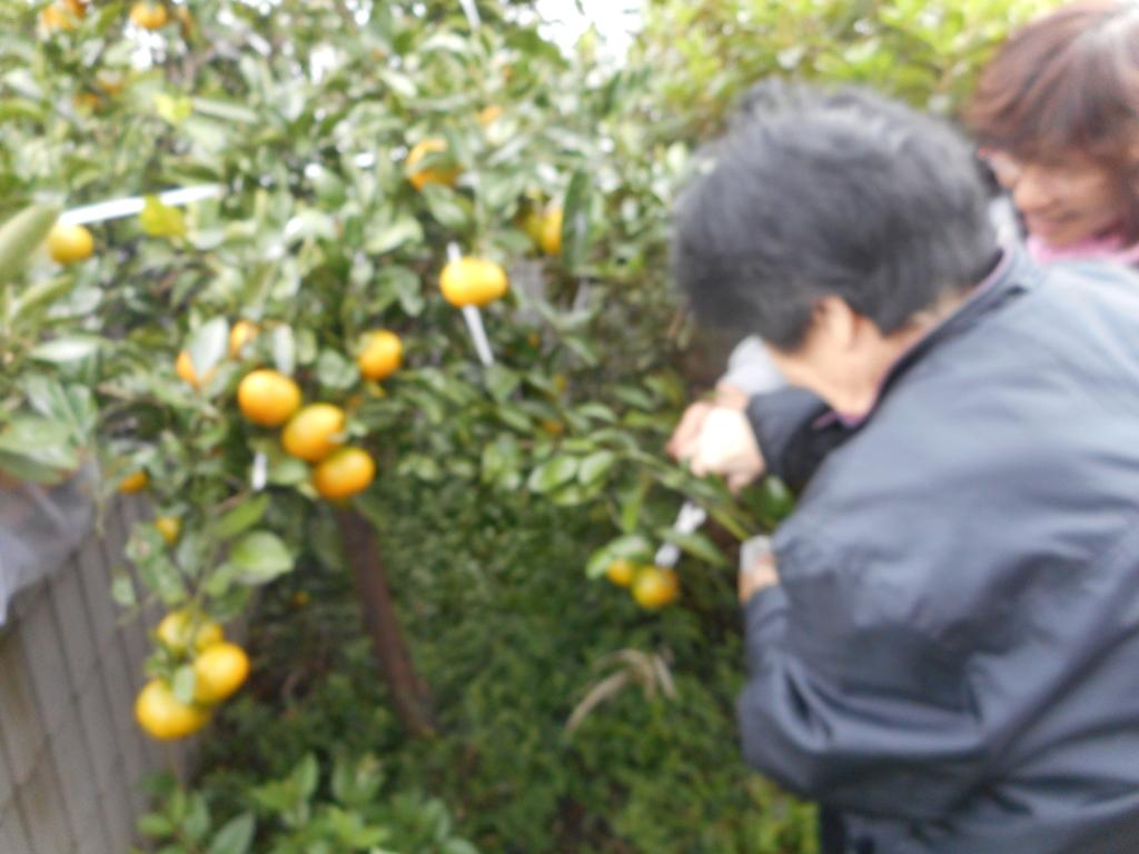 f:id:gc-hanasima:20161224142931j:plain