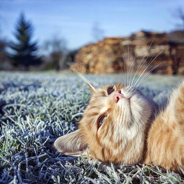 猫氏、冬の空気を堪能する