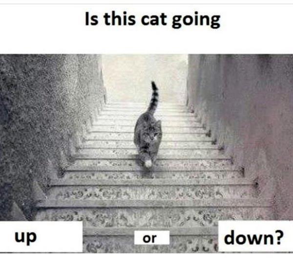 ネコが階段を登ってるか降りてるか分からない画像